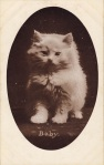 Postal ilustrado Baby-cat, by M.T. Sheahan, a printer publisher that was active from around 1903 to approx. 1910