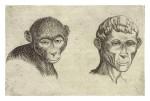 Giambattista della Porta. Macaco