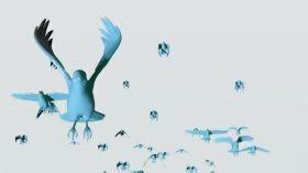 France 24. The Birds.