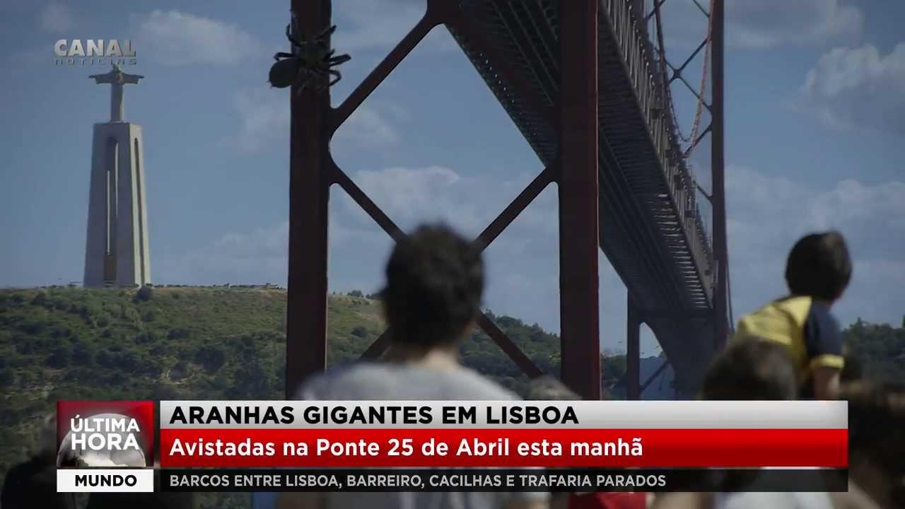 Aranhas Gigantes em Lisboa