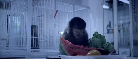 Operação Sorriso. Continue Macaco