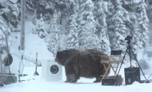 Huge-Bear-Surprises-Crew-on-EcoBubble-Photo-Shoot-in-BC-YouTube