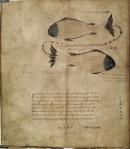 Cicero's Aratea, Hyginus, Astronomica 03