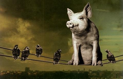 Pink Floyd. Pigs