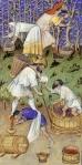 07 IGrandes heures de Rohan. Mês de Outubro. Maître de Rohan, Anjou. 1415.