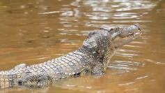 land-rover-genuine-parts-crocodile-600-75576