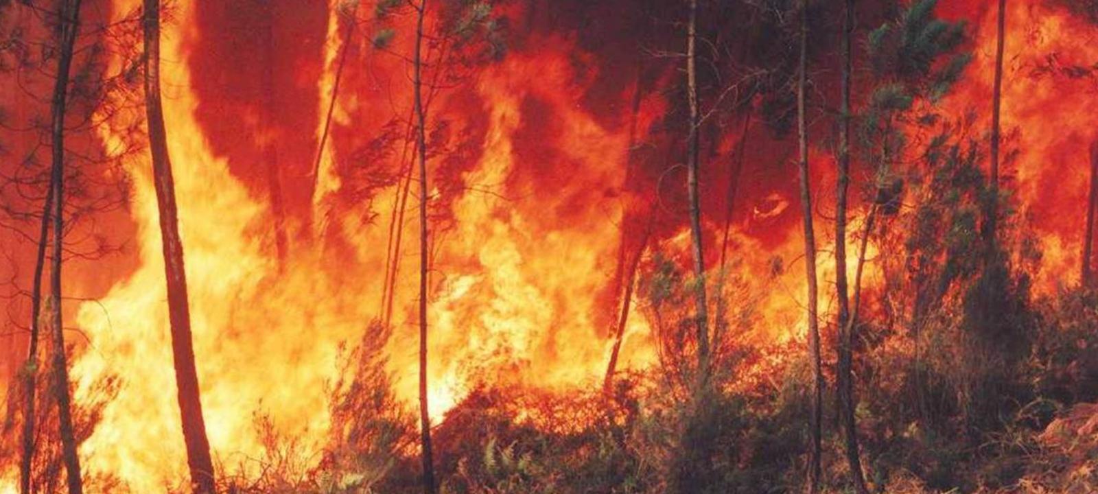 Incêndio em Caminha. 2015.