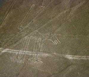 Cão. Nazca. Perú.