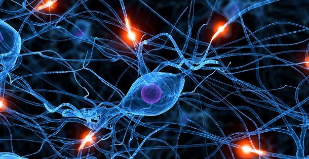 neurónios