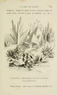 07. JJ. Grandville. Plantes Marines, Coquillages, Madrépores.