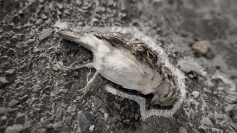 biodiversity-sparrow