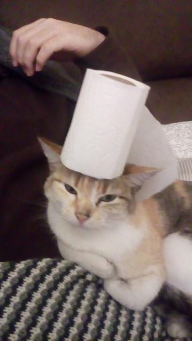sushi-a-cuidar-das-ideias