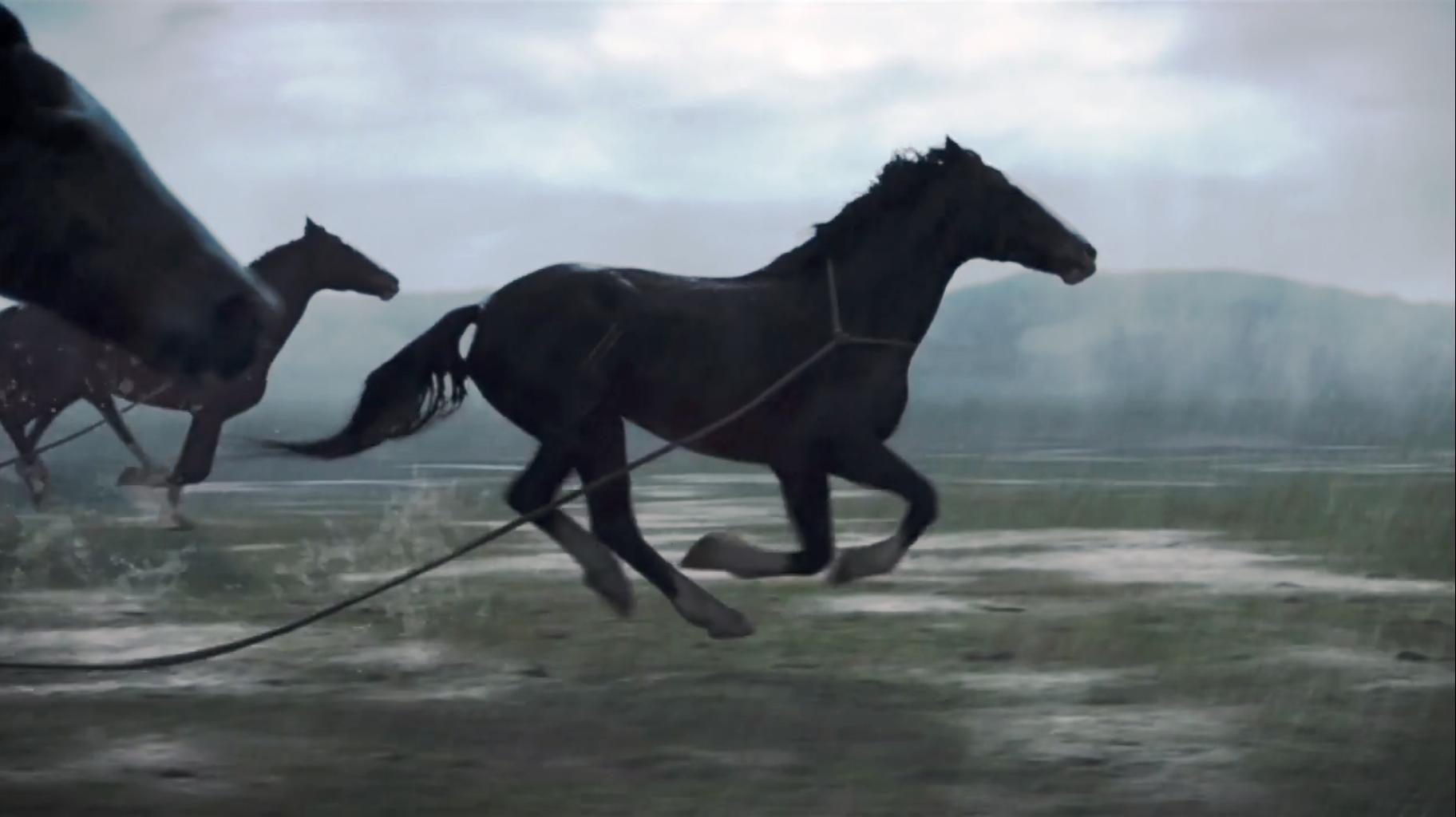 Trail Cavalos.png