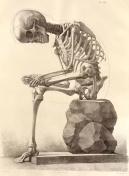 "25. Francesco Bertinatti.""Elementi di anatomia fisiologica applicata alle belle arti figurativi. Vol.1. Turim, 1837-39"