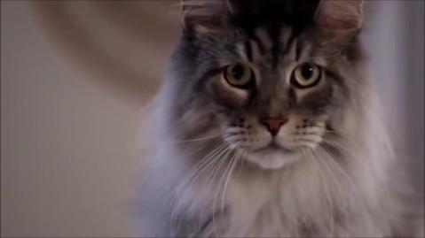 Catspiracy