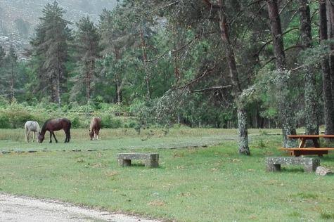 41.Lamas de Mouros