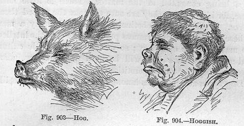 S. Wells, New Physiognomy, or Signs of Character..., NY, 1871