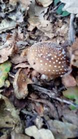 Cogumelos 5